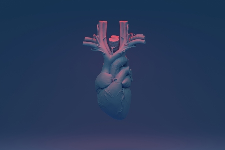 organ meat