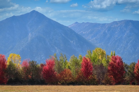 The fall foliage in Carson Valley, Nevada