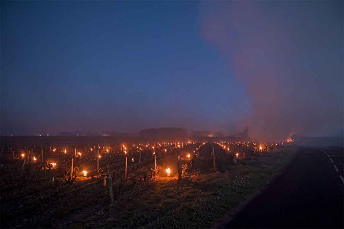 This photograph taken at dawn on April 7, 2021 shows fires lit in the vineyards to protect them from frost at the heart of the Vouvray vineyard in Touraine