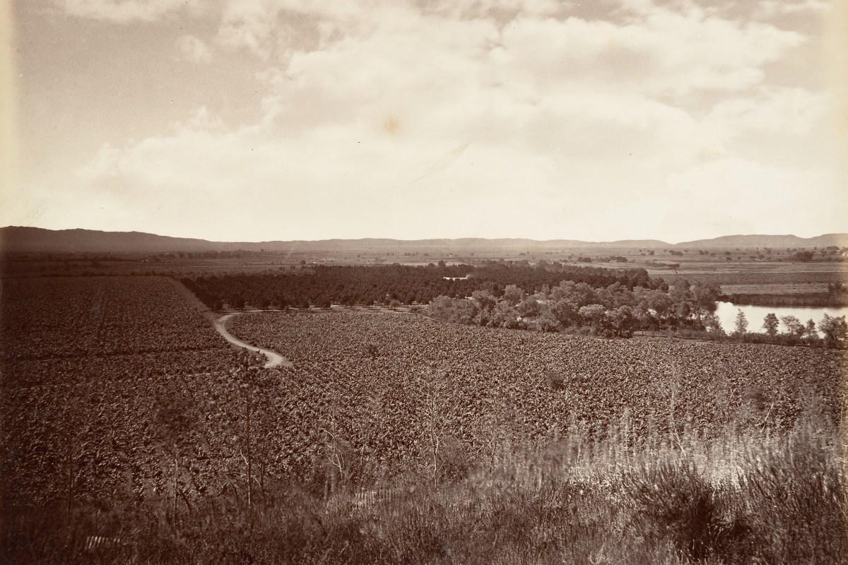 The Lake Vineyard and Orange Grove in Los Angeles, c. 1876