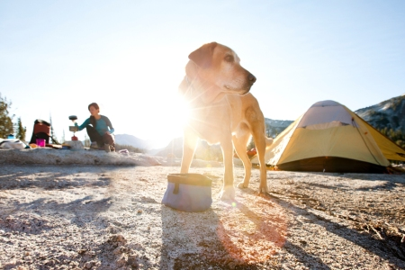 The Best Camping Gear for Dogs