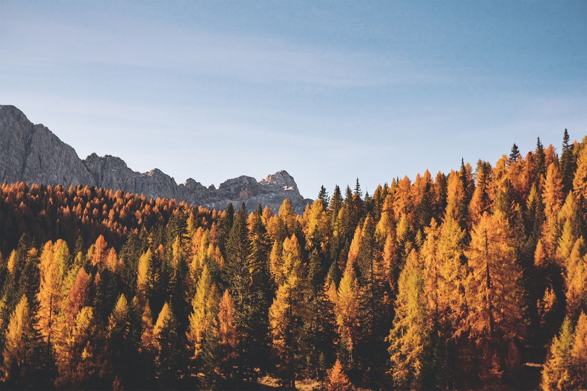 An expanse of yellow, orange and green leaves on trees in a valley with mountains in the background against a blue sky