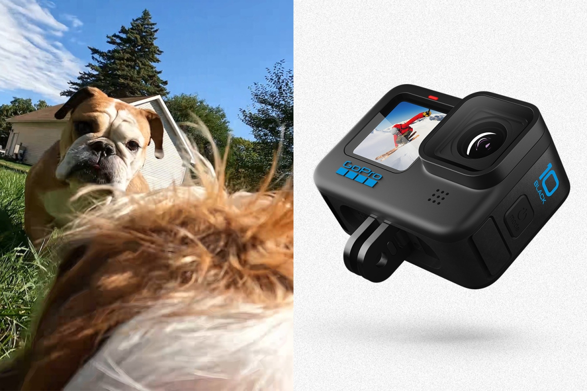 On the left, a screenshot from a video taken from the back of a miniature dachshund on a GoPro looking at an American bulldog. On the right, the new GoPro Hero10 Black action camera.