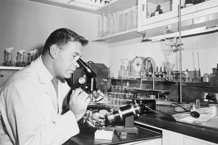 Henry Isenberg, the chief microbiologist, examines a specimen of sperm at the Long Island Jewish Hospital Infertility Clinic.